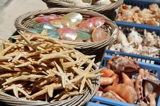 Free Baskets Of Sea Shells And Starfish For Sale Stock Image - 20160741