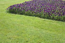 Free Landscaped Garden Stock Image - 20160841