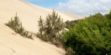 Free Dune Du Pyla Royalty Free Stock Photography - 20162777