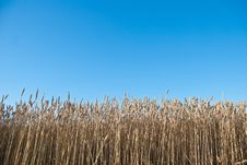 Free Wheat Field Stock Photo - 20162890