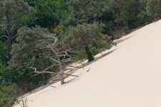 Free Dune Du Pyla Royalty Free Stock Photography - 20163337