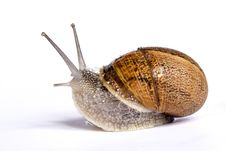 Free Snail On White Stock Photos - 20163633