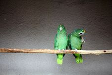 Free Parrots Royalty Free Stock Photos - 20164228