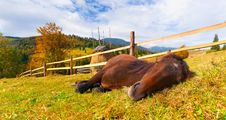 Free Horse In The Mountains Stock Photography - 20165052