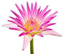 Free Beautiful Lotus Stock Images - 20165214