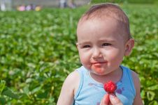 Free Baby Eating Strawberry Stock Photos - 20165343