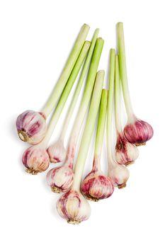 Free Garlics Stock Image - 20166131