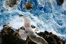 Free Seagull Hunting At The Sea Royalty Free Stock Photo - 20166675