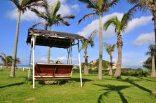 Free Palm Tree And Swing Royalty Free Stock Photo - 20168315