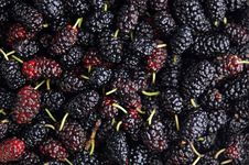 Free Fresh Mulberry Stock Photos - 20168453