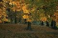 Free Autumn Landscape Royalty Free Stock Photo - 20172205