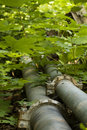 Free Aluminum Pipes Pipeline Bush Stock Image - 20176051