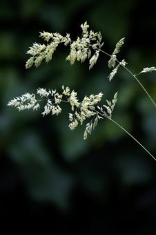 Free Wild Grass Stock Images - 20170864