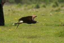 Free Hawk Eyes Hunting Stock Photos - 20171733