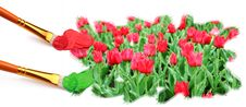 Free Painting Field Of Red Tulips. Royalty Free Stock Images - 20173799