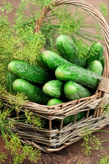 Harvest Cucumbers In A Basket Stock Photos
