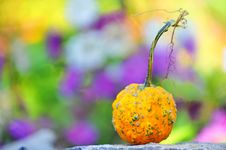 Free Harvested Pumpkin Stock Photography - 20174942