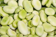 Free Broad Beans Royalty Free Stock Photo - 20176705