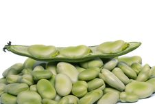 Free Broad Beans Royalty Free Stock Images - 20176749