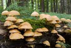 Free Mushrooms On Tree Trunk Stock Photos - 20178273