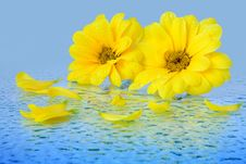 Free Yellow Flowers On A Blue Background Stock Photo - 20178360