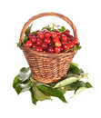 Free Basket With A Red Cherry Stock Images - 20182044