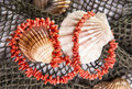 Free Coral Necklace Stock Image - 20182621