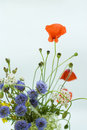 Free Red Poppies End Wild Flowers On A White Background Stock Photography - 20183362