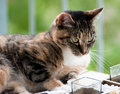Free Cute Tabby Cat Portrait Royalty Free Stock Photos - 20188088