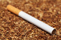 Free Close Up Of Cigarette On Tobacco Stock Image - 20189281