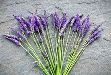Free Lavender On A Shale Stone Stock Photo - 20181150