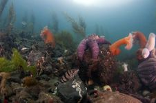 Free Undersea Garden Stock Photos - 20181813