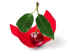 Free Cherry Like Sail In Rose Petals Stock Image - 20181971