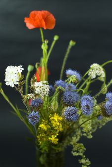 Wild Flowers On The Black Stock Photo