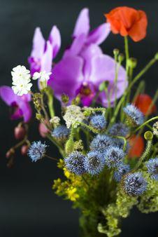 Wild Flowers On The Black Stock Photos