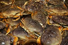 Free Dungeness Crabs Royalty Free Stock Images - 20185969