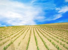 Free Field Over Blue Sky Royalty Free Stock Photo - 20186635