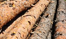 Free Logs Stock Image - 20187681