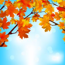 Free Red And Yellow Leaves Against Bright Sky. EPS 8 Stock Image - 20188221