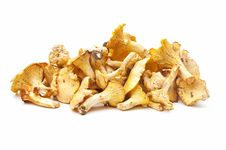 Free Edible Mushrooms Royalty Free Stock Photography - 20189267