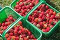 Free Strawberry Baskets Stock Photo - 20194670