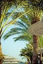 Free Palm Trees And Umbrellas On A Beach Stock Photos - 20194833