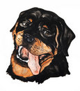 Free Portrait Of A Rottweiler. Drawing Watercolor Stock Photo - 20195420