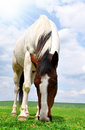 Free Horse In The Meadow Stock Photo - 20199690