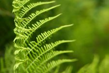 Free Pattern Of Fern Leaves With Copyspace Stock Image - 20193171