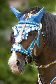 Free Horse Stock Photos - 20193643