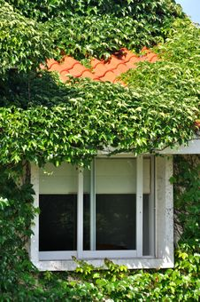 Villa Covered By Green Plant And Window Royalty Free Stock Photography