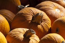 Free Pumkin Patch Royalty Free Stock Photos - 20197888