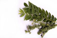 Free Curry Leaves And Cilantro Stock Image - 20198851
