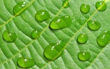 Free Dewy Leave Royalty Free Stock Photos - 20199648
